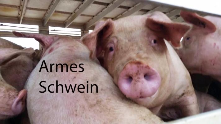 armes schwein